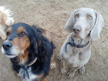 2dogs.jpg