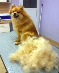 Hunde-Friseur-Salon.jpg